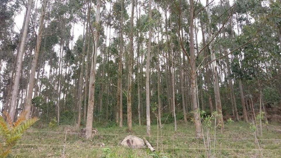 Terreno Rural em Braço do Norte  - Foto 2
