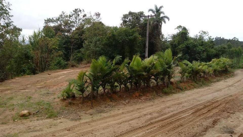 Terreno Rural em Braço do Norte  - Foto 4